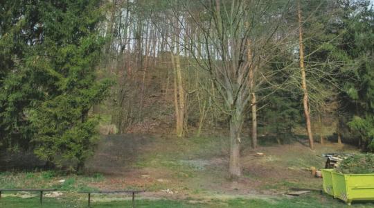 Lípa u klášterského fotbalového hřiště. Foto: iniciátoři projektu