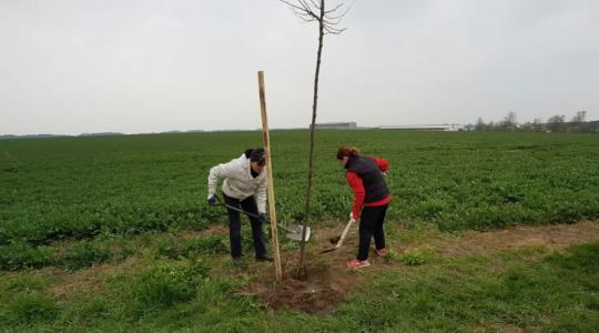 Ilustrační foto – výsadba stromů v Dolní Rokyté v dubnu 2019. Foto: Josef Malík